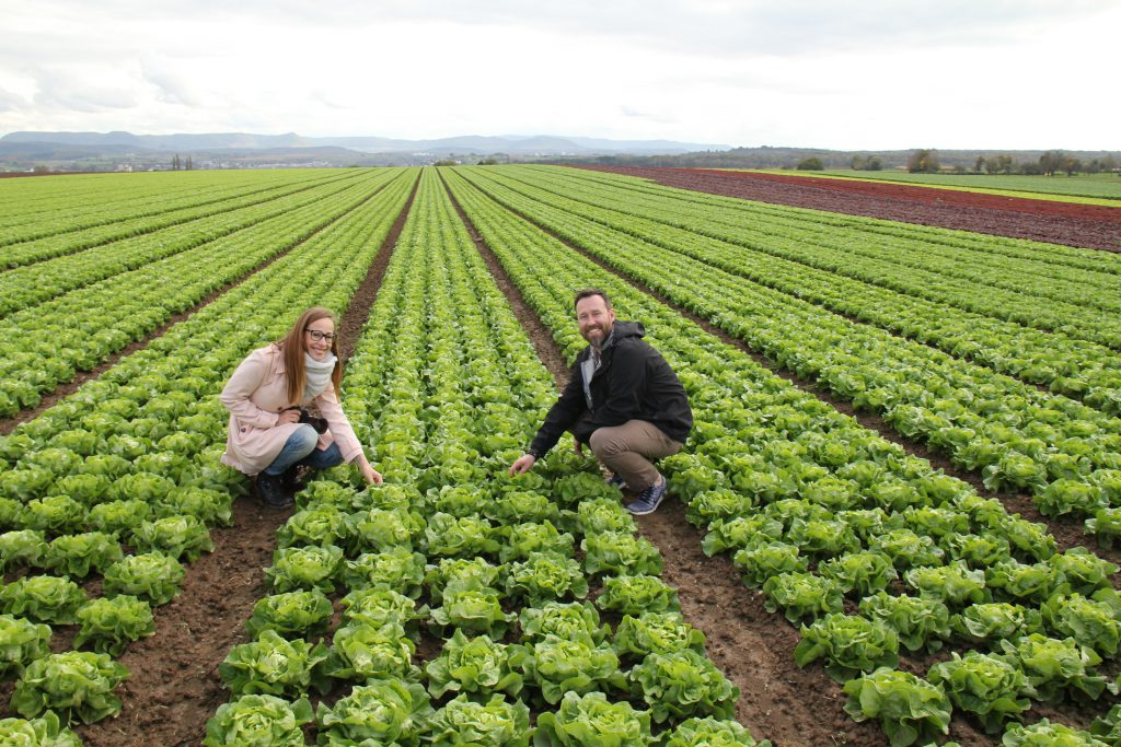 Kochhelden im Salatfeld