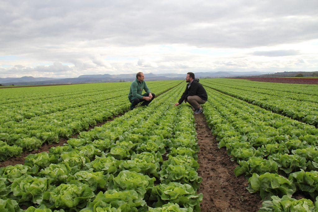 Frisch Gemüseexperten unter sich