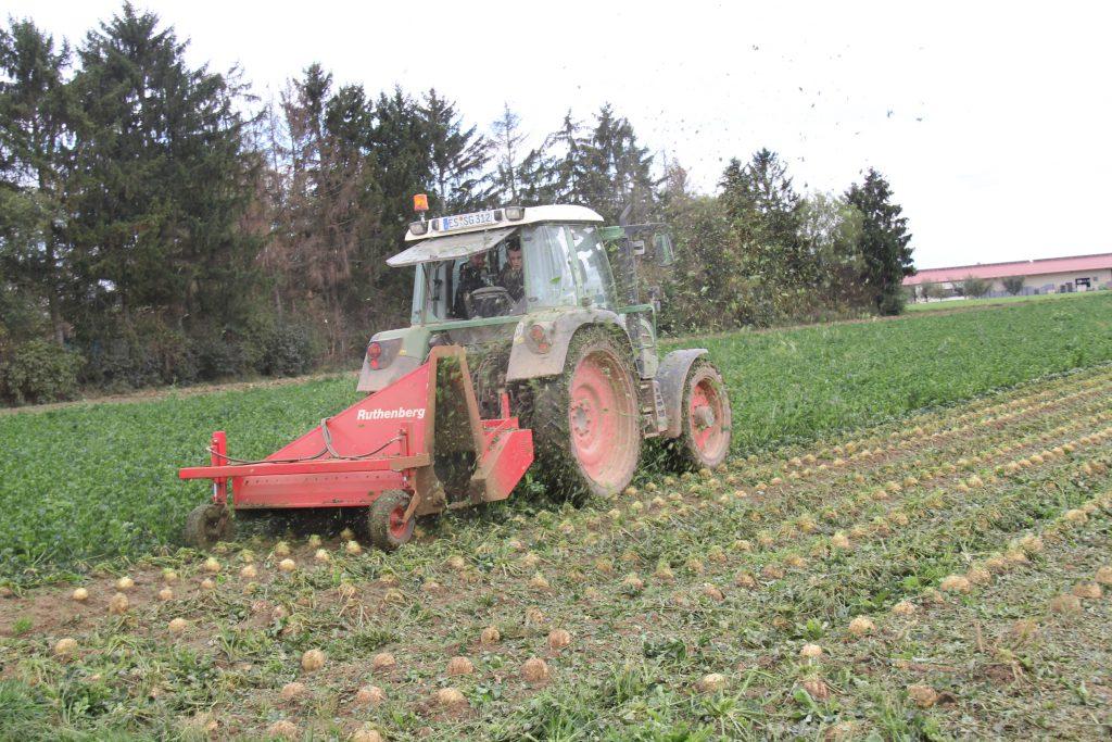 Traktor bei Sellerie Ernte